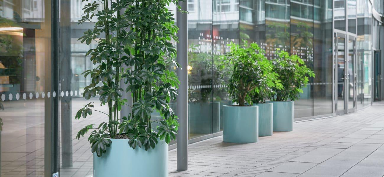 Växtinredning