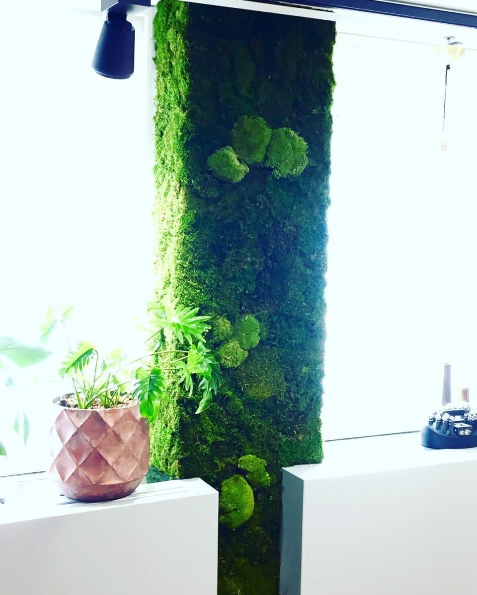 Växt och mossvägg