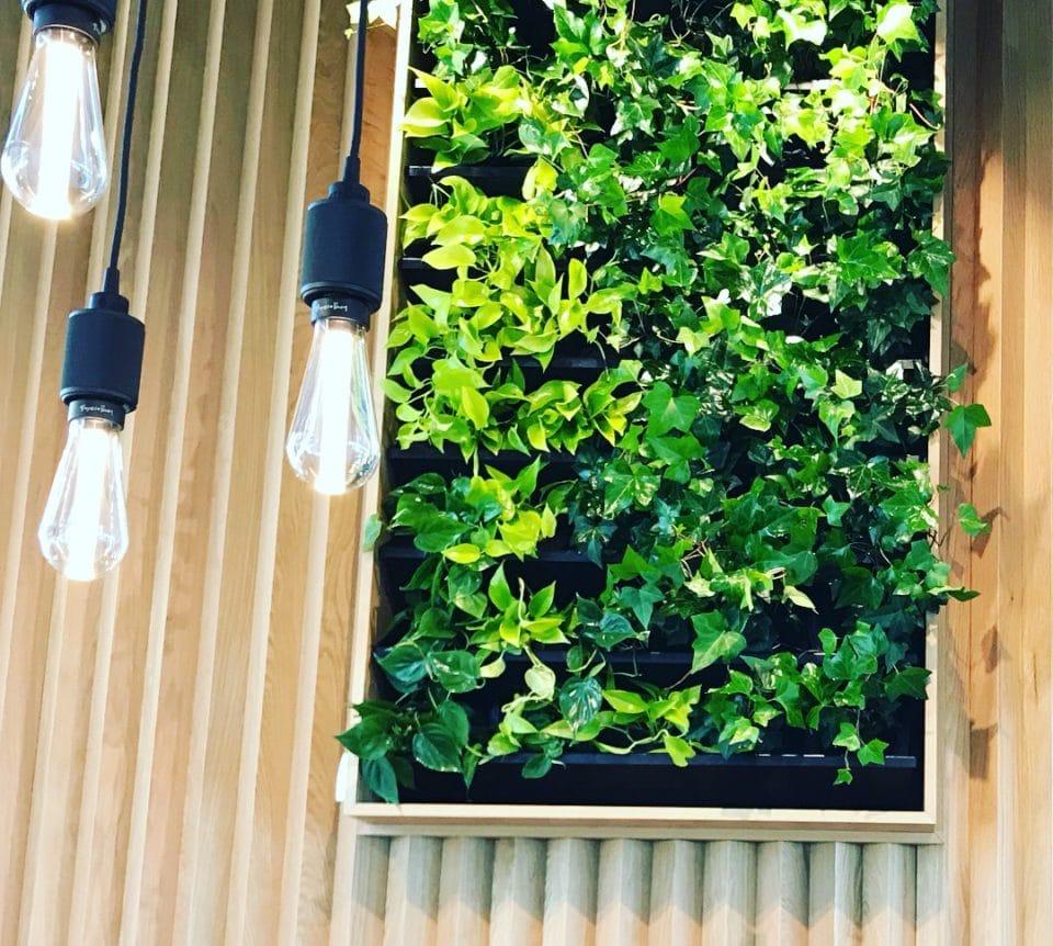 Växtvägg med ram