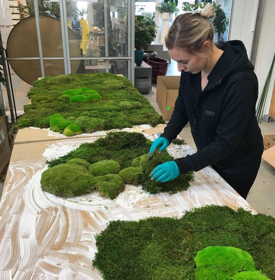 Så skapar vi en mossvägg