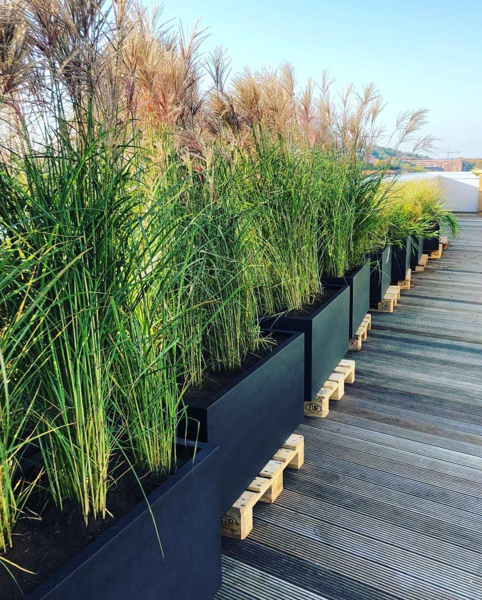 Japanskt gräs i svarta krukor