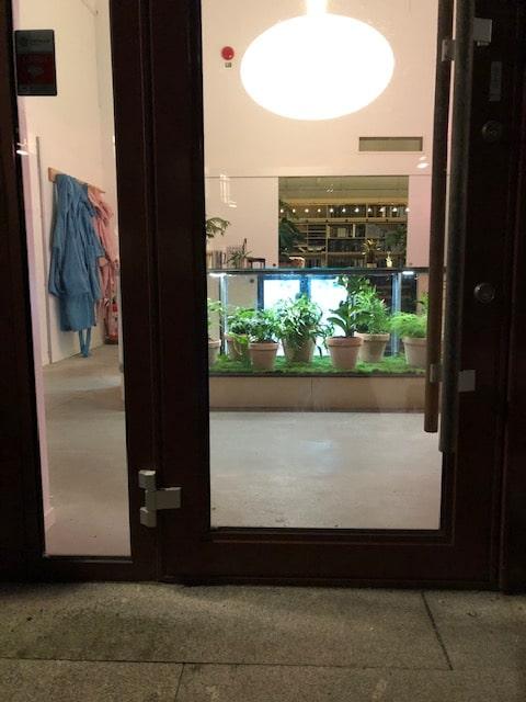 Växter i glasdisk
