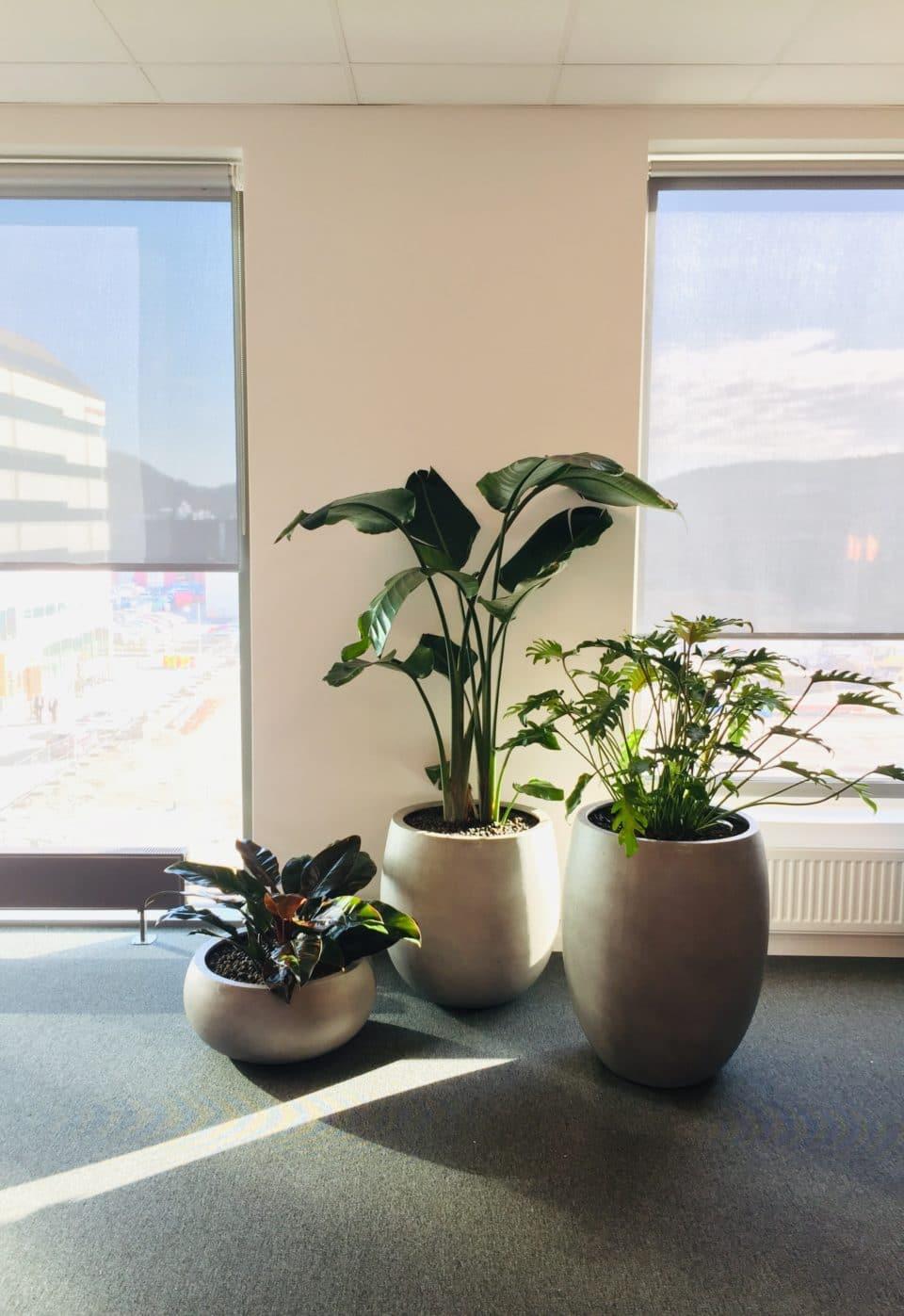 Grupp av tre växter