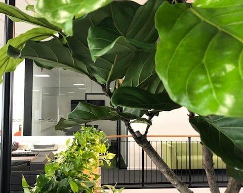 Öppet i tak balkongplantering
