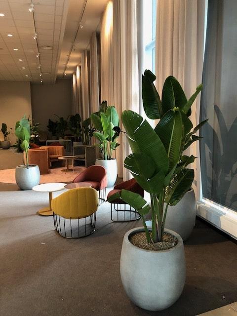 Kontorslandskap med bananträd